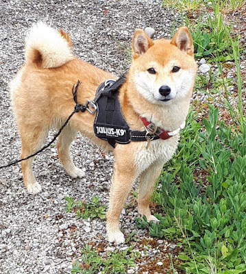 educateur canin ecole du chiot haute savoie