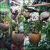 Pot Cantik Ramah Lingkungan
