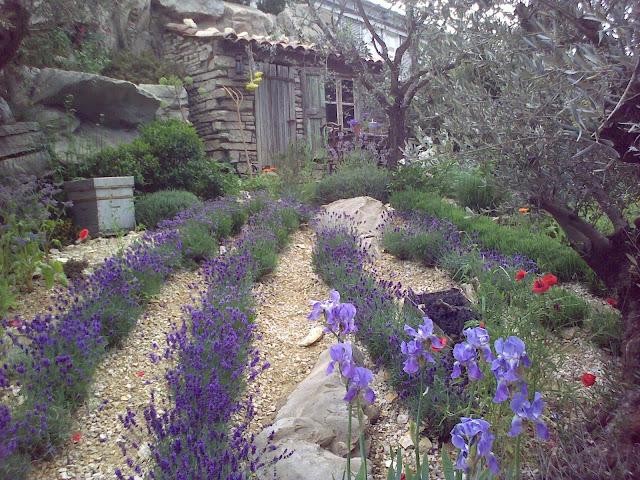 ogród prowansalski, lawenda