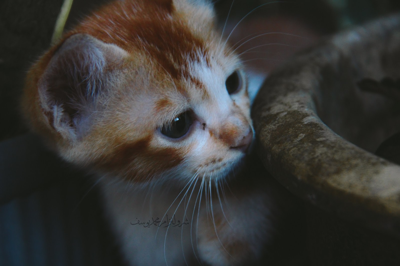 Anak Kucing Yang Comel Dan Riang - 6