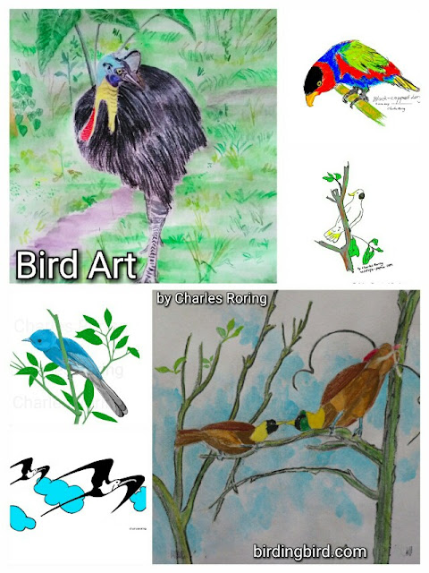 drawings and paintings of birds