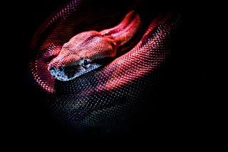 tips pertolongan pertama digigit ular