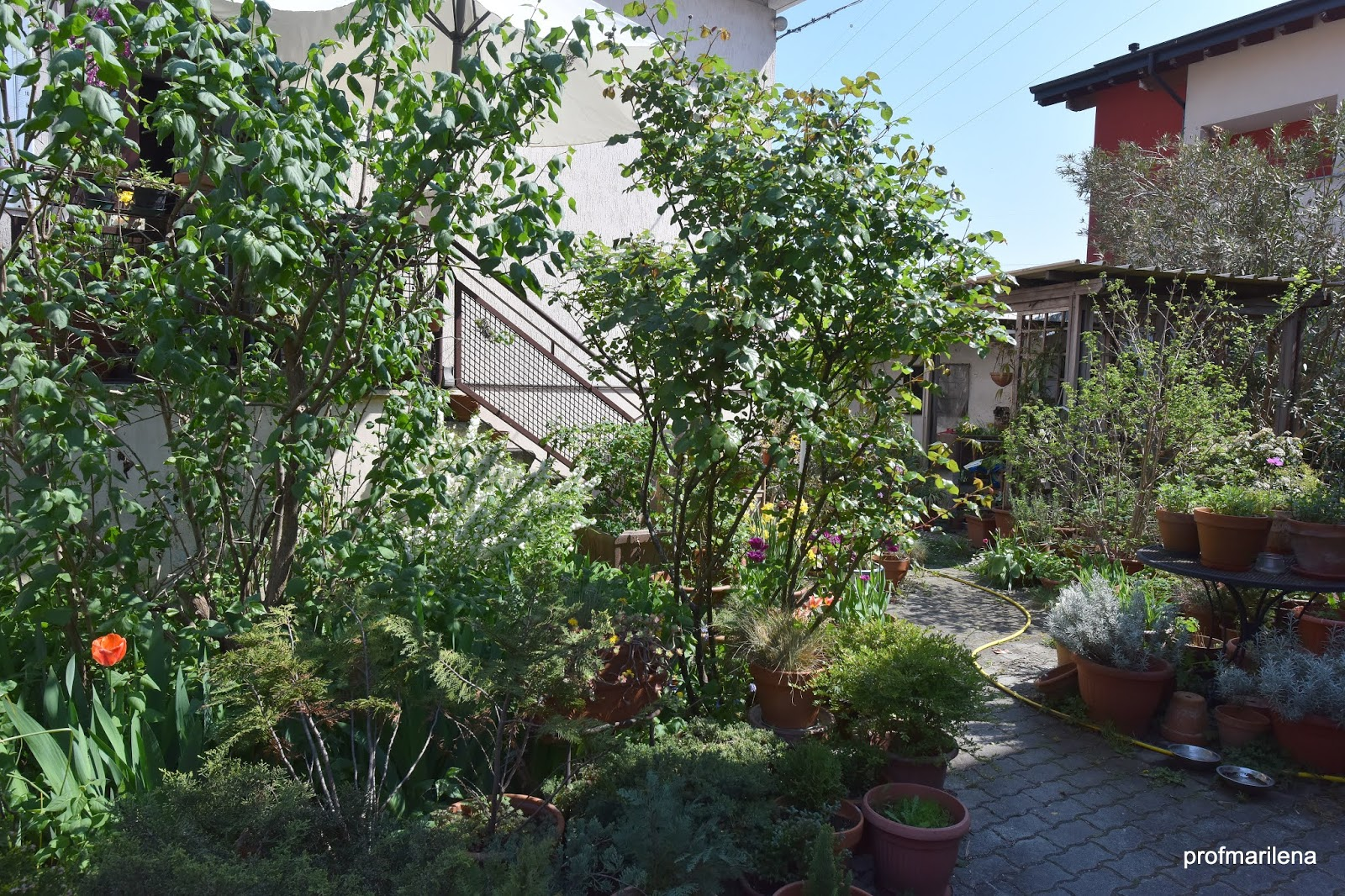 Allontanare Lucertole Dal Terrazzo appunti verdi