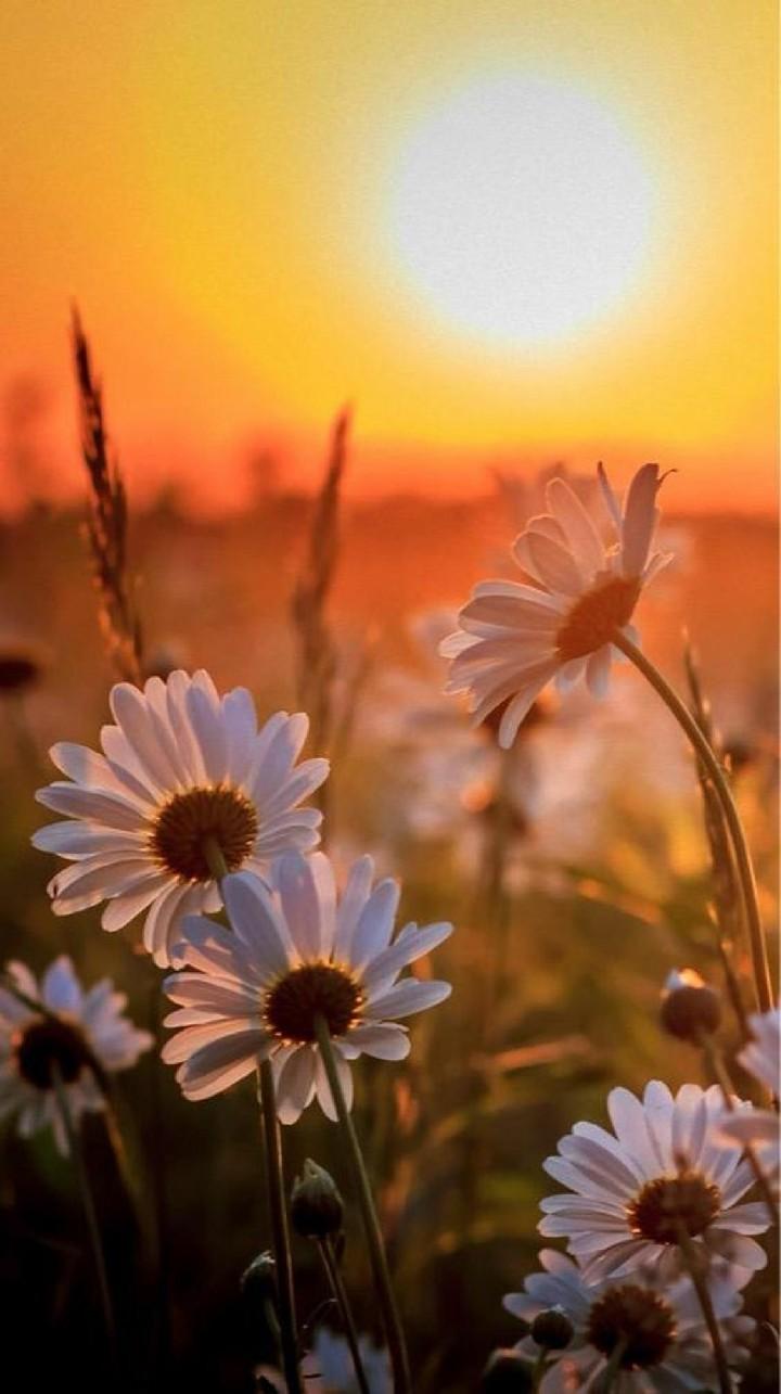 Hinh nen hoa cuc dep%2B%252811%2529