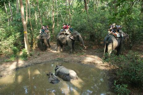 elefanti Chitwan