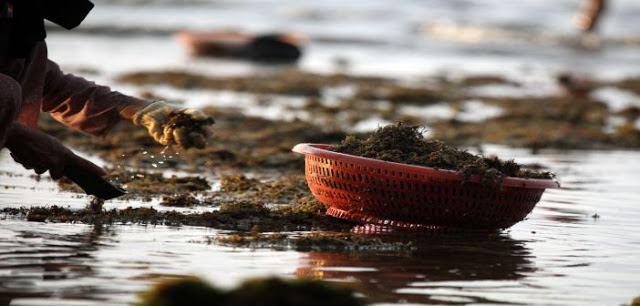 Hoạt động du lịch biển trên huyện đảo Lý Sơn - Quảng Ngãi 2