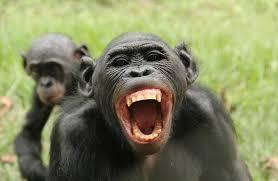 القرود مهددة بفيروس كورونا