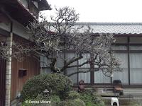 Private garden, Nagasaki, Japan