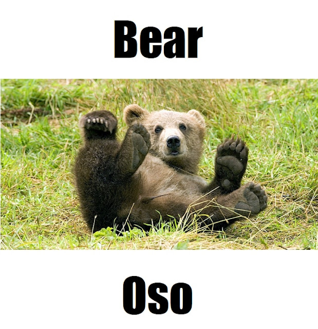 "The Tagalog translation for ""bear"" is Uso."