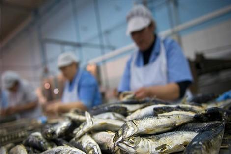 """""""بؤرة السمك"""" في آسفي تجلب احتجاج العاملات واستنفار السلطات"""
