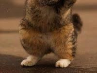 Ekspresi kucing lucu saat marah bikin ngakak tapi serem nomer 25 di tinggal kondangan