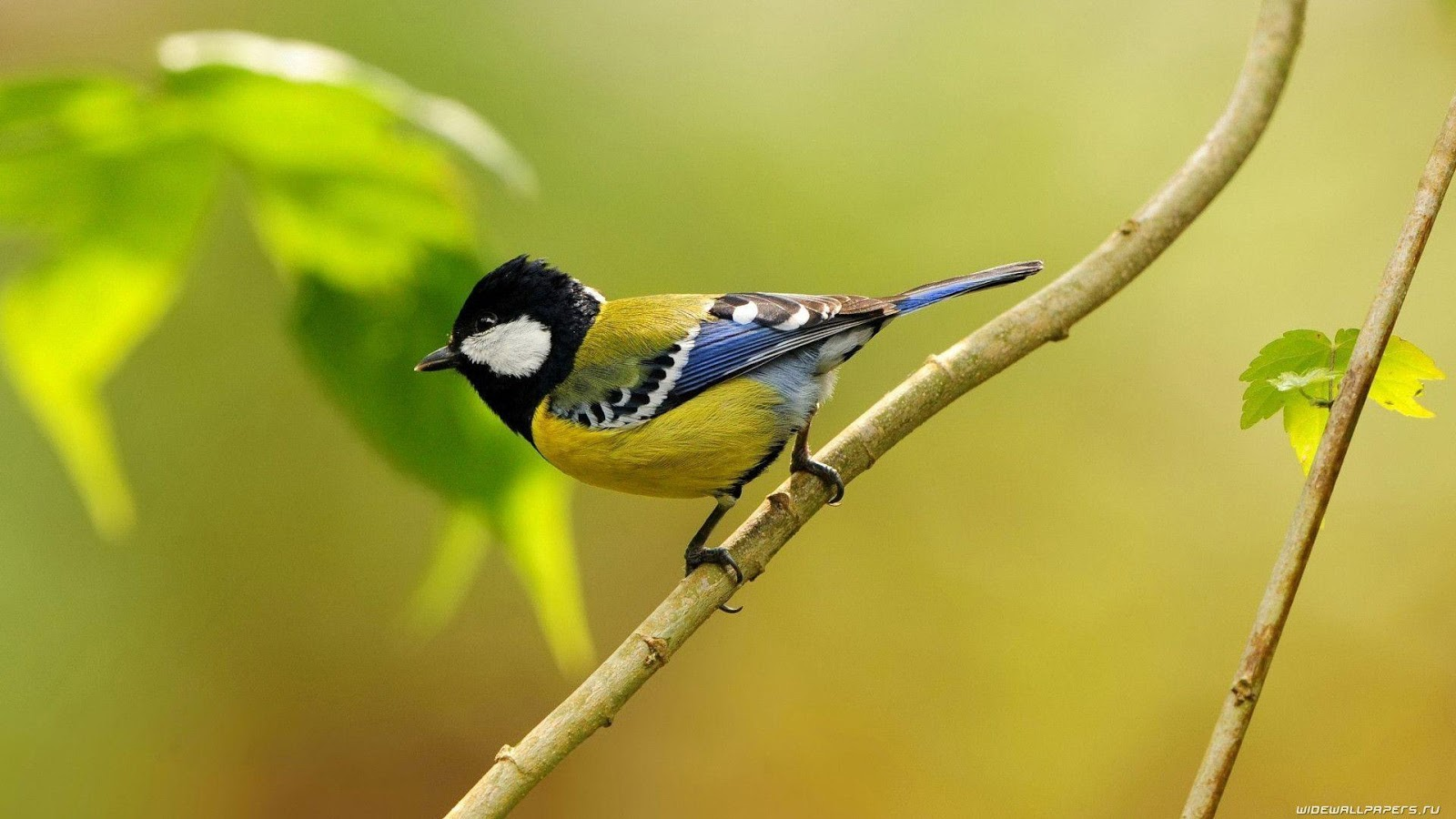 """Desktop Wallpapers Birds HD. Birds, Birds Wallpaper, Birds"