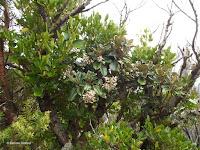 Half-alive, half-dead shrubs - Mount Taranaki trail, New Zealand