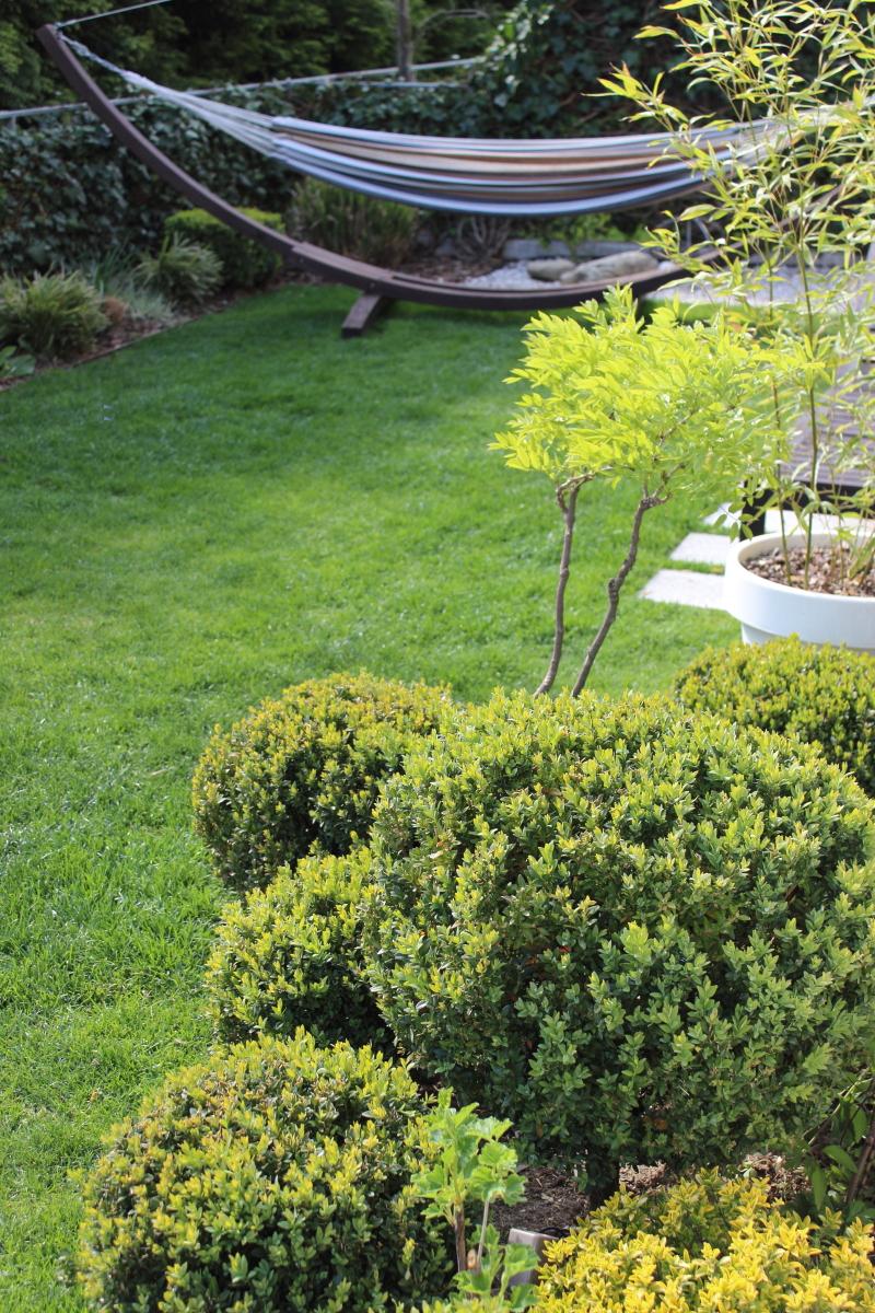 Garten im April bei kebo homing, Buchsbaum Kugel, Formschnitt, Beet, Rasen, Frühling, Hängematte im Garten, Forsythie