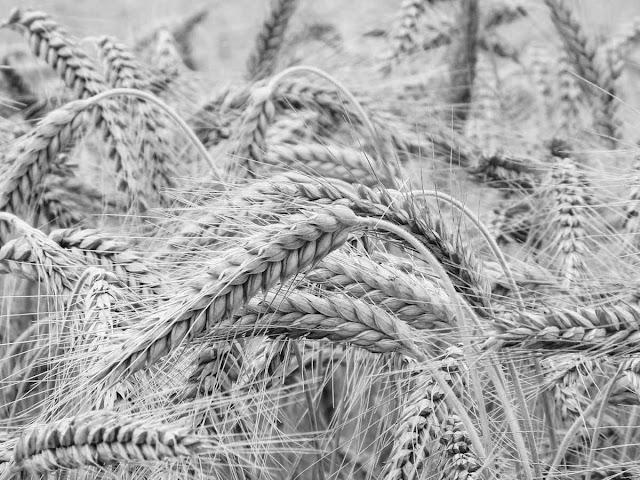 Гранты сельскохозяйственным кооперативам