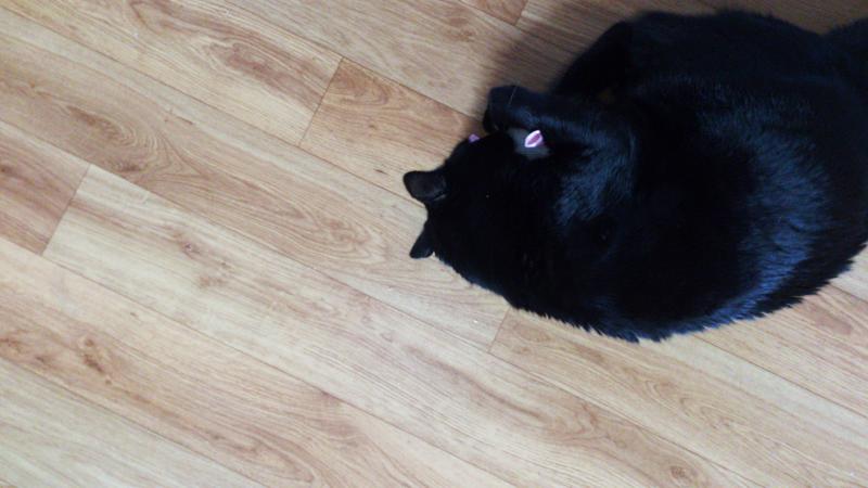 Gucci le chat et sa Miaoubox d'été