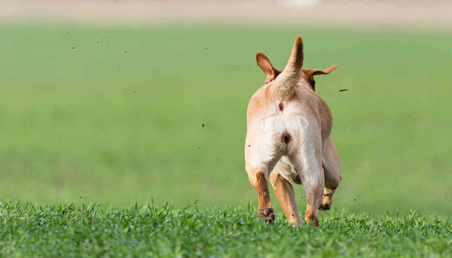 Why Do Dogs Run Away? Understanding Why Your Dog Is Fleeing