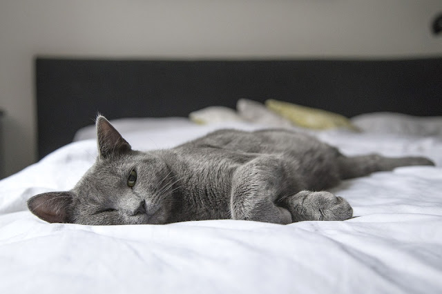 cat lying on bed with eyes half shut