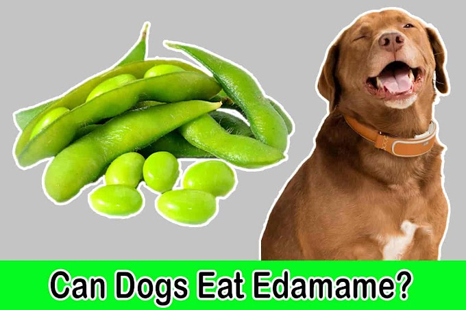 [2021] Can Dogs Eat Edamame | Is Edamame Good for Dogs