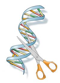 Molecular Scissors
