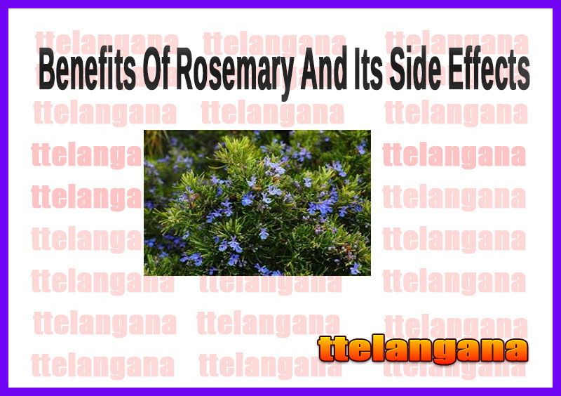 Benefits Of Rosemary And Its Side Effects