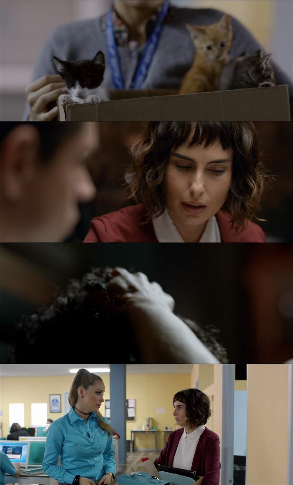 El Hubiera si Existe (2019) HD 720p Latino