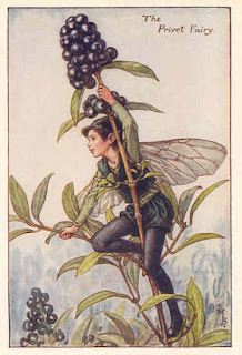 The Privet Fairy, Flower Fairies, Cicely Mary Barker