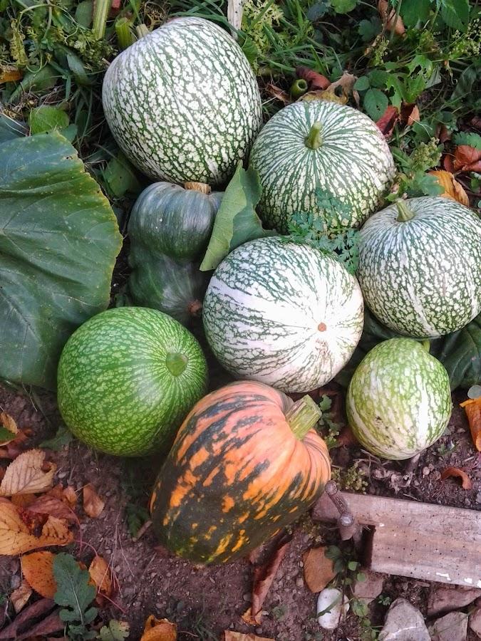 Frutos recogidos en el huerto de Otoño