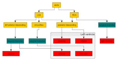 Coronary Arteries | Coronary Arteries Functions