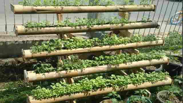 पोषण वाटिका के तहत पोषण और हर्बल पौधों के रोपण से बाहरी निर्भरता कम होगी: डॉ. मुंजपारा महेंद्रभाई
