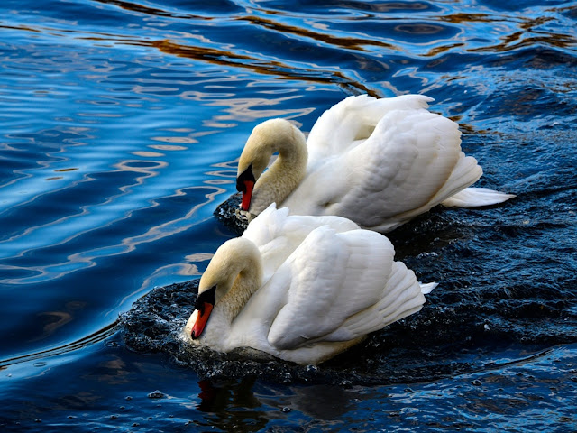 100+ Love Bird Images wallpaper free download HD