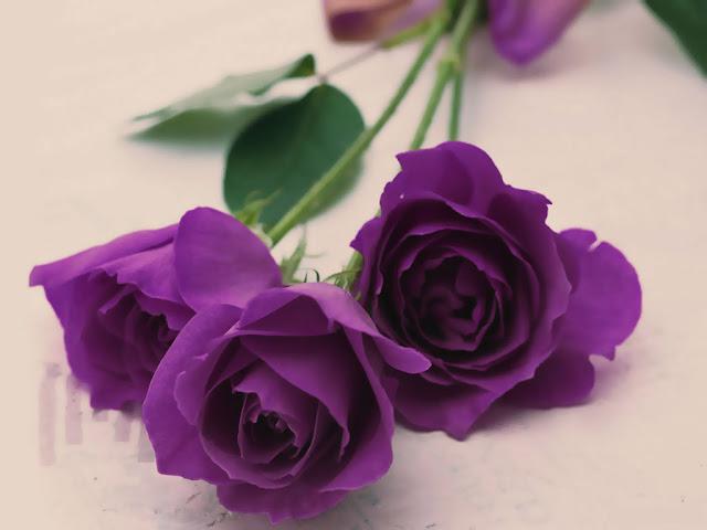 bó hoa hồng tím đẹp nhất thế giới 1