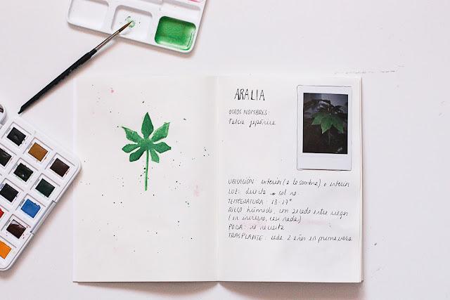 https://mediasytintas.blogspot.com/2019/09/diario-de-plantas-y-cuidados.html