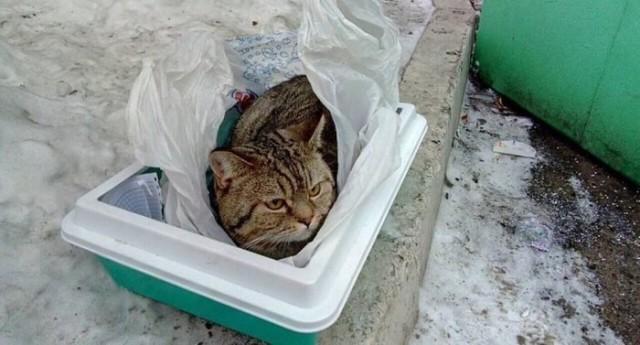 Красноярцы выбросили зимой британского кота Лёву на помойку, как мусор в пакете, засунув в его же лоток. К коту прилагалась записка от «добрых» хозяев….