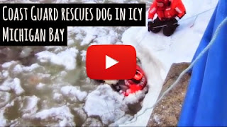 Watch how members of the U.S Coast Guard rescued a dog stuck in bitter cold freezing icy waters of the Michigan Bay as they braved through the frozen water to save the struggling dog via geniushowto.blogspot.com animal rescue videos