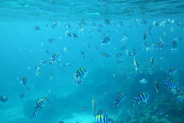 Deep six ตั้งอยู่ทางตอนเหนือสุดของเกาะ เป็นจุดดำน้ำลึก ที่มีความลึก 5-40 เมตร