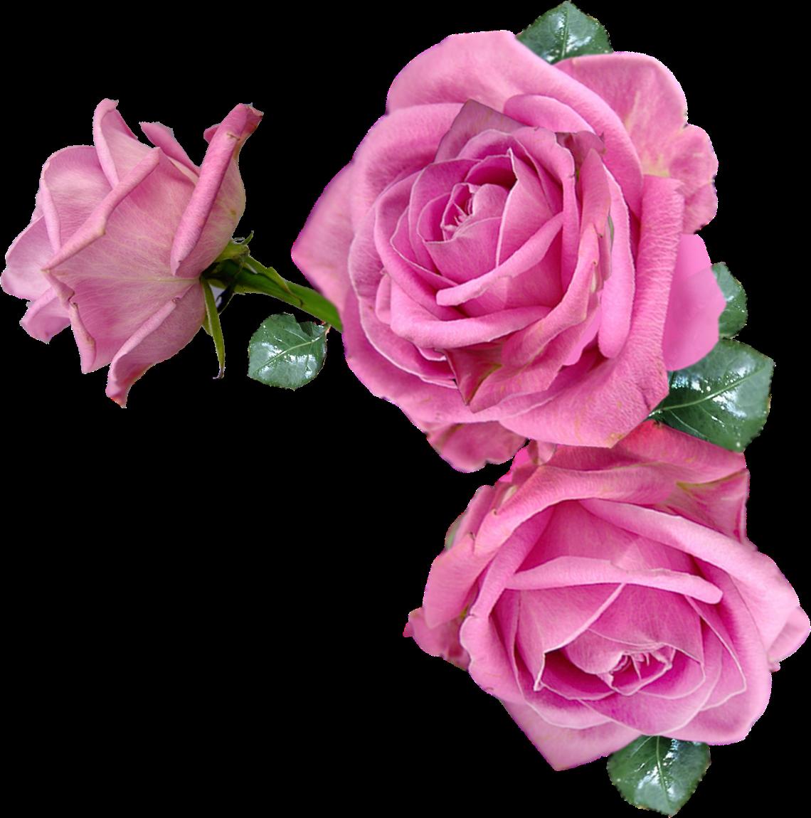 Обои gift, сердечки, roses, розовые розы, I love you. Настроения