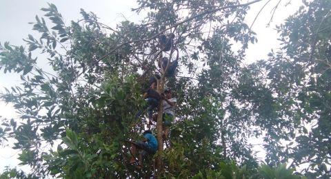 Miris! Demi Sinyal untuk Belajar Online, Siswa Panjat Pohon Belasan Meter