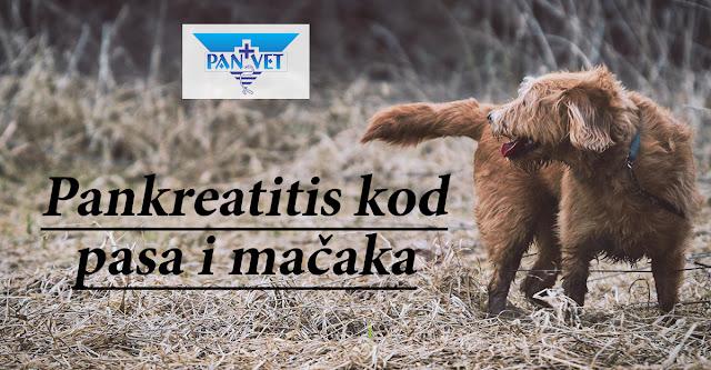 Pankreatitis kod pasa i mačaka