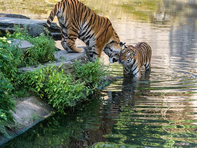 حديقة حيوان كولونيا