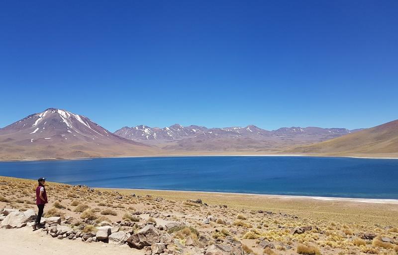 O que fazer no Atacama: 3 Lagunas Altiplânicas, Miscanti e Miñique