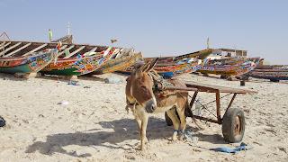 Enjoys a break in Mauritania