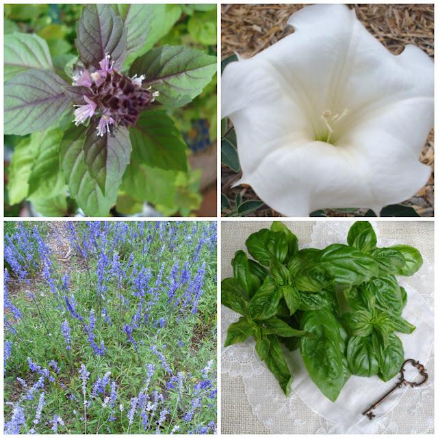 Secret Garden Herbs organic seeds