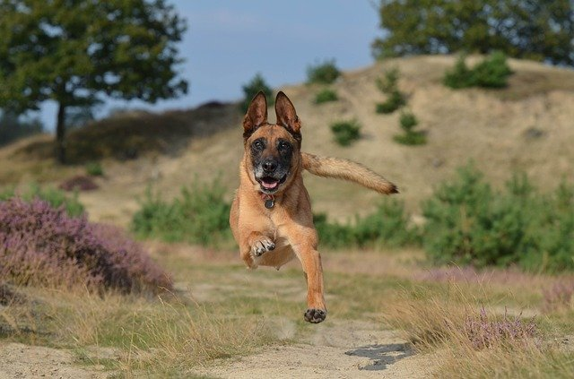 German male dog names