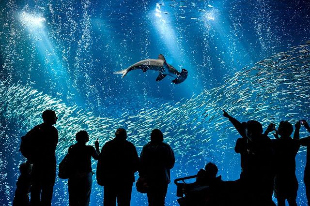 Atrativos no Aquário do Pacífico em Long Beach