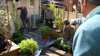 placing plants