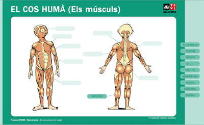 http://www.text-lagalera.cat/interact/lamines/primaria/TPI_musculs.html