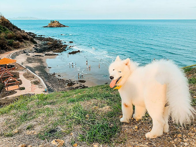 Tourist discovers Vung Tau with pet