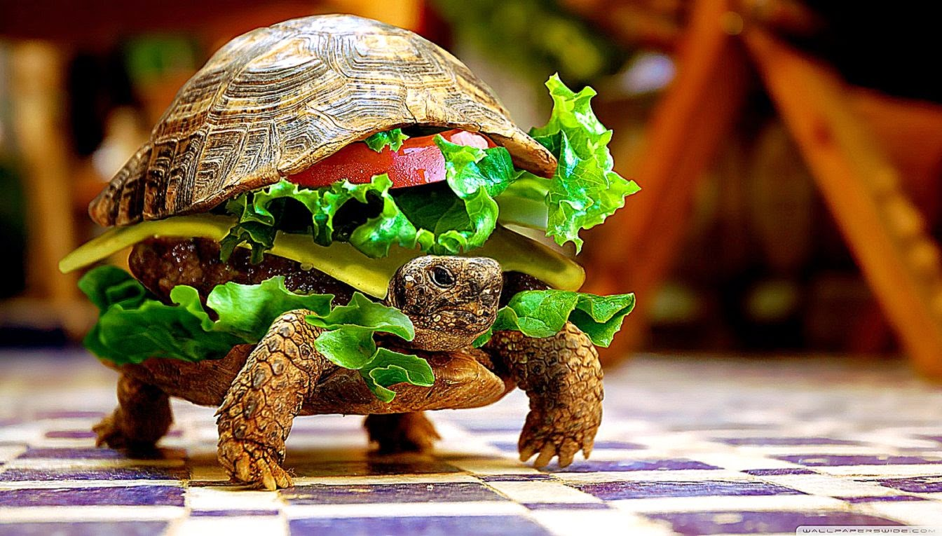 Funny 3d Animal Turtle Wallpapers Hd: Cheese Turtle Burger Funny Animal Wallpaper