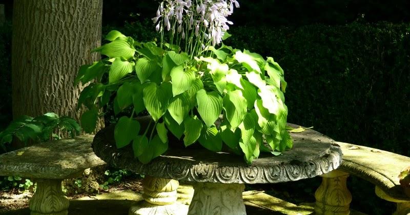 10 plantas para jardines en sombra guia de jardin for Planta arbustos para jardineras